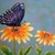 Butterfly On Flower Painting, original, fine art, realism, botanical, nature,