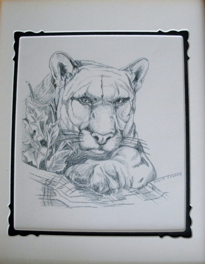 Drawing Of Mountain Lion, original fine art, cougar, realism, animal, country
