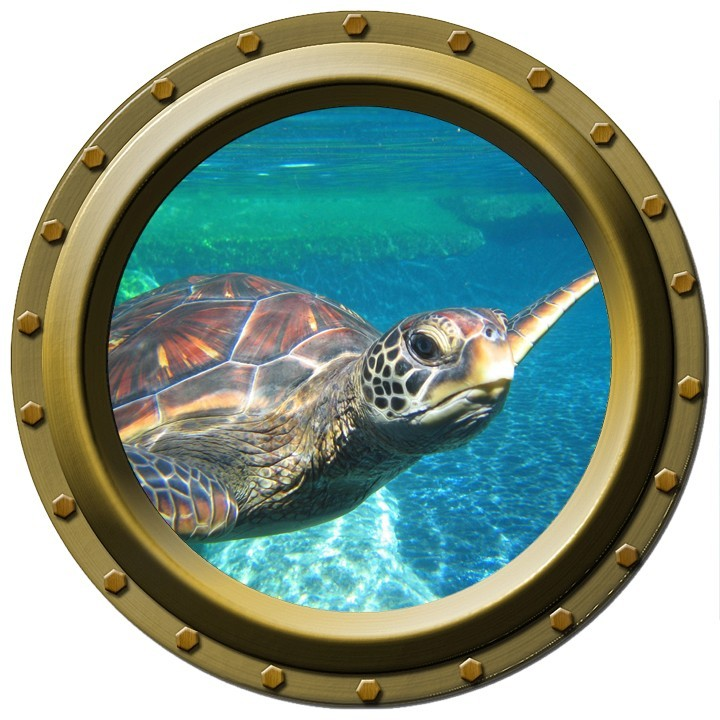 Large Sea Turtle Watching You Porthole Wilsongraphics