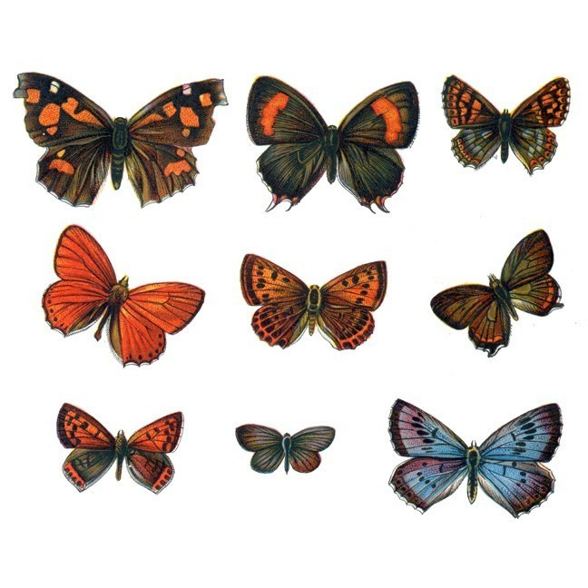 19 Vintage Styled Butterfly Decals Set Design Two - Sizes Shown on Example Image
