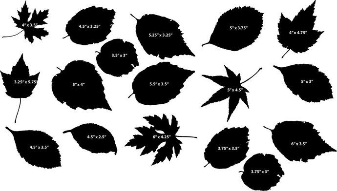 The Leaves of Fall Vinyl Decal Collection - Overall size of Set as Shown 16""