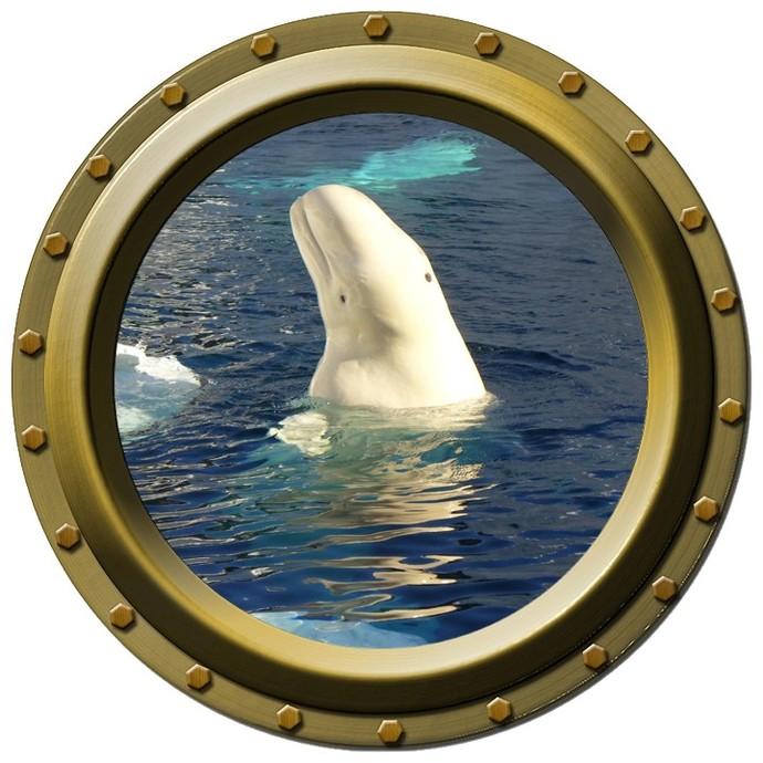 Beluga Whale Design Two Porthole Wall Decal