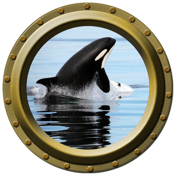 Orca Killer Whale Porthole Design One Wall Decal