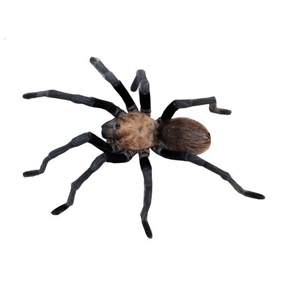 Giant Tarantula Spider Wall Decal - Available in various sizes