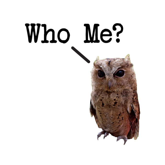 "Who Me Cute Owl Wall Decal Set - 11"" wide x 12"" tall"