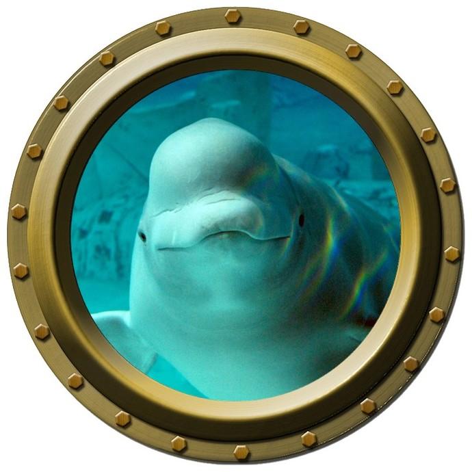 Beluga Whale Design Three Porthole Wall Decal