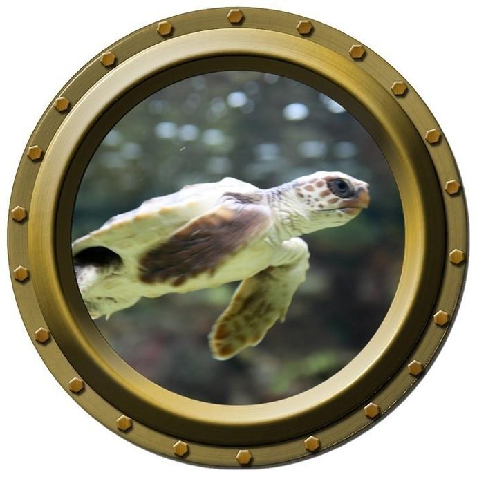 Baby Sea Turtle Porthole Wall Decal