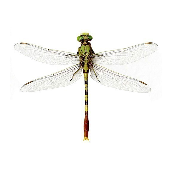 "Large Bright Green Dragonfly Wall Decal - 9"" tall x 12"" wide"