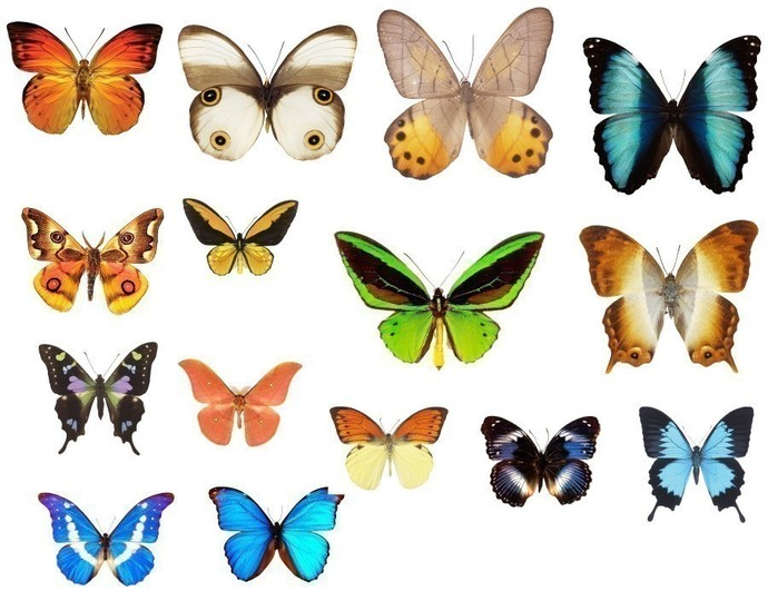 15 Assorted Mini Butterfly Decals