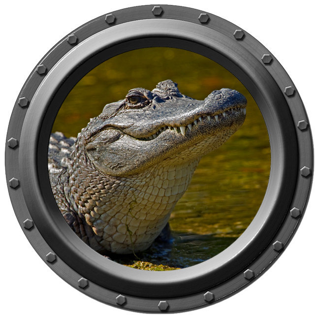 Gator Watching Porthole Wall Decal