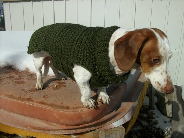 Easy Crochet Dog Sweater Pattern For By Copperllama On Zibbet