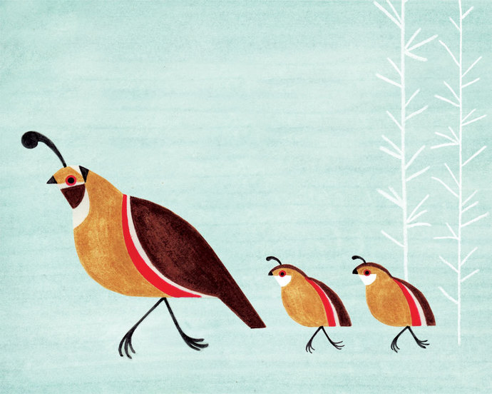 Quail Family Illustration Archival Art Print for Nursery, Kitchen, Kids Room