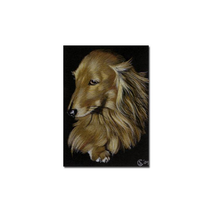 "ACEO COMMISSION PET Custom PORTRAIT Sandrine Curtiss Original Art 2.5""x3.5"""