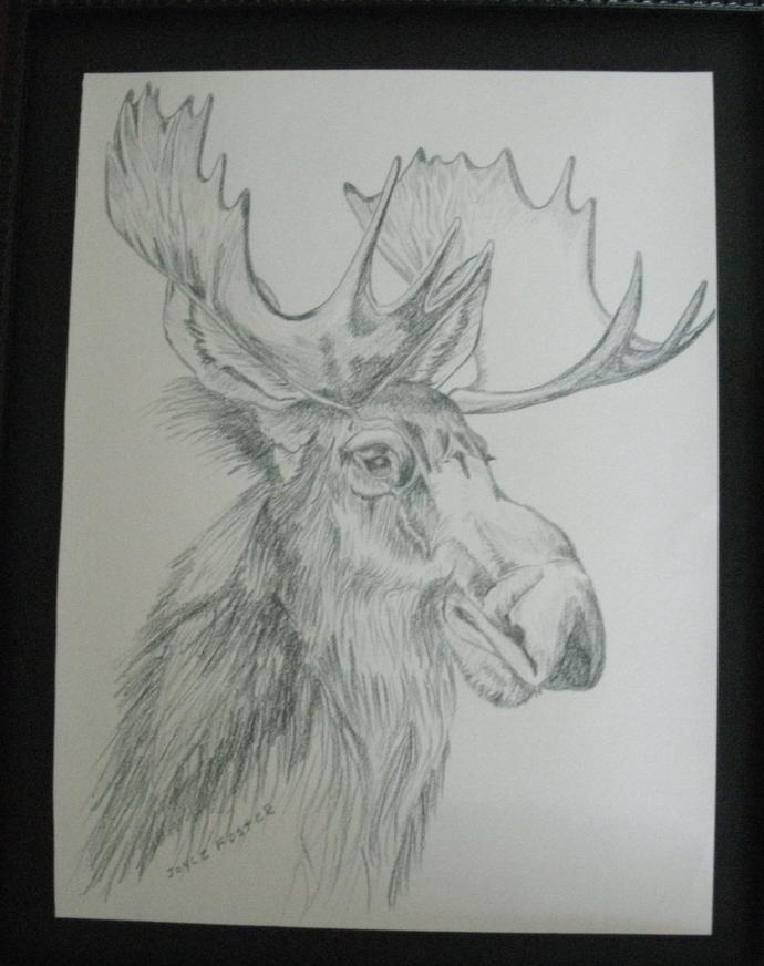 Moose Drawing, original, fine art, realism, animal, woodland, rustic, nature,