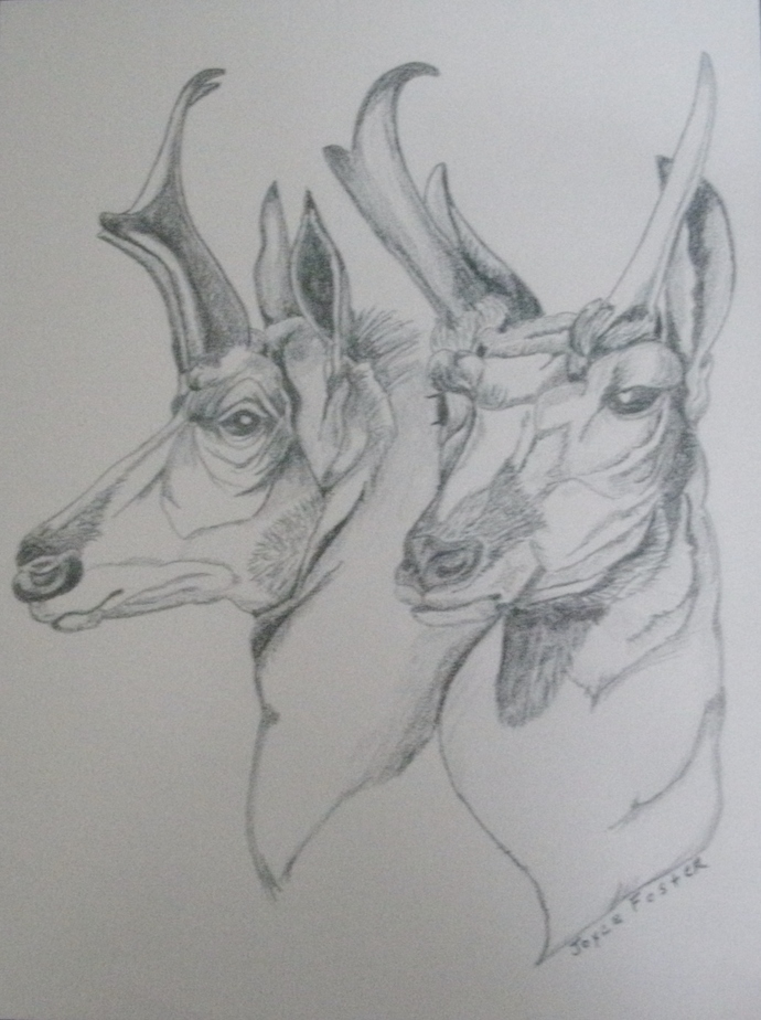 Antelope Drawing, original, fine art, realism, animal, woodland, rustic, country