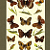 Butterflies and Caterpillars 1912 Edwardian Rowland Brown Antique Engraved