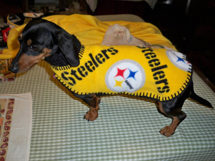 ab3a781da27 Your cart is empty. Keep shopping! NFL PITTSBURGH STEELERS Dog ...