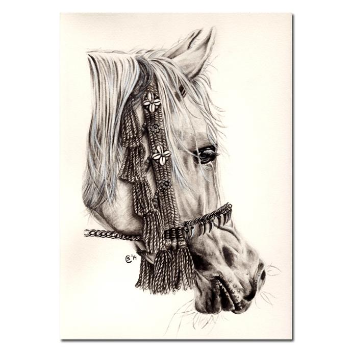 HORSE 10 Arabian portrait stallion mare cheval arabe water soluble graphite