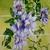 Flowers On Trellis Painting, original fine art botanical realism garden cottage
