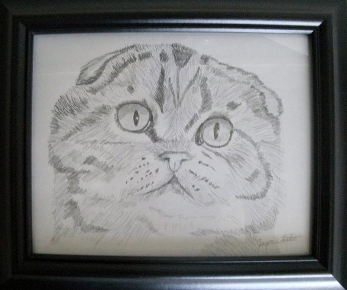 Drawing Of Scottish Fold Cat, fine art, realism, original, animal, feline,