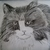 Drawing Of Long Haired Cat, fine art, realism, original, animal, feline, kitten,
