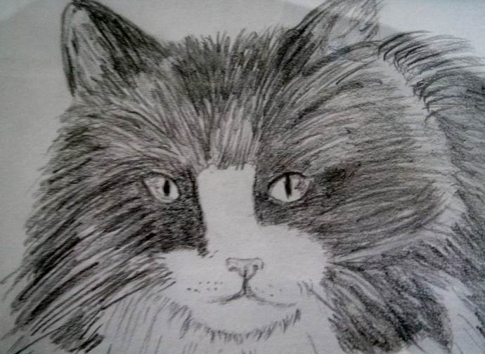 Drawing Of Long Haired Cat, fine art, realism, original, animal, feline, kitten,