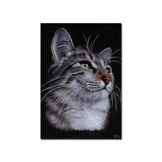 Tabby 71 CAT grey tiger kitty kitten drawing painting Sandrine Curtiss Art PRINT