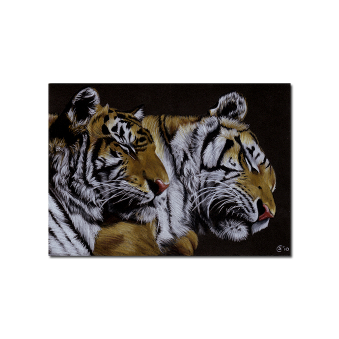 TIGERS big cat animal feline kitty kitten drawing painting Sandrine Curtiss Art