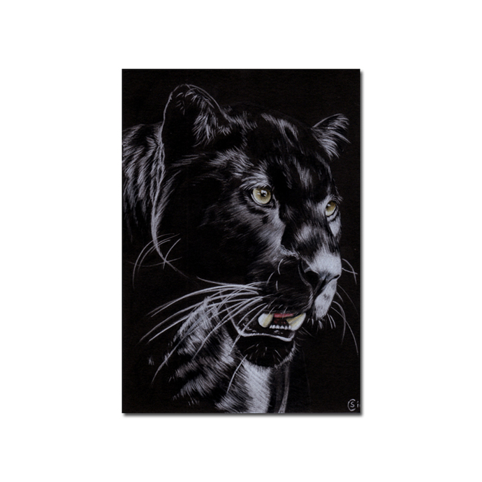 BLACK PANTHER 13 big cat animal feline kitty kitten drawing painting Sandrine