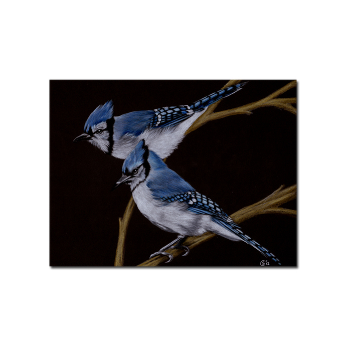 BLUE JAY 3 bird egg chick drawing painting Sandrine Curtiss Art PRINT 5x7""
