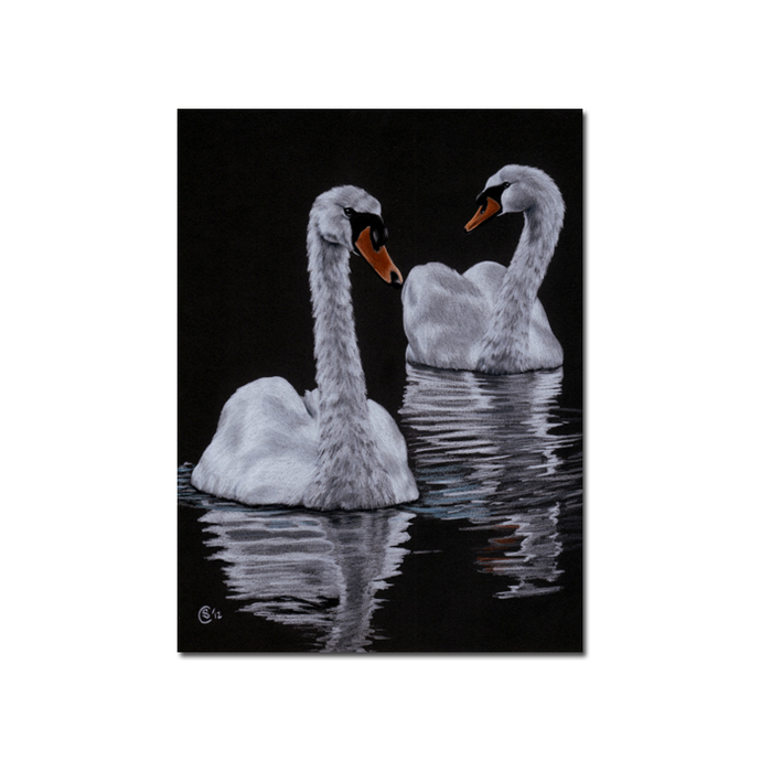 SWAN 3 bird duck chick drawing painting Sandrine Curtiss Art PRINT 5x7""
