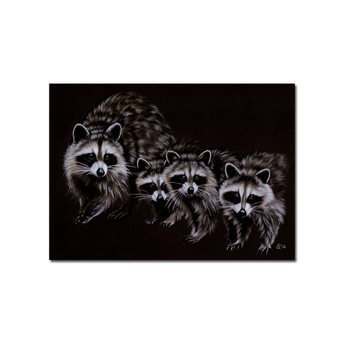 RACCOON 12 woodland critter  pencil painting Sandrine Curtiss Art Print 5x7""