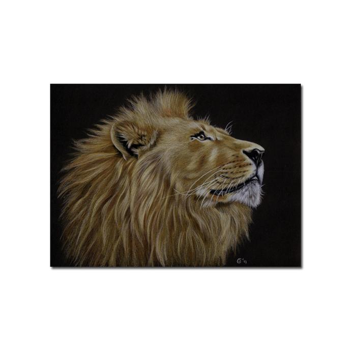 LION 19 big cat animal feline kitty kitten drawing painting Sandrine Curtiss Art