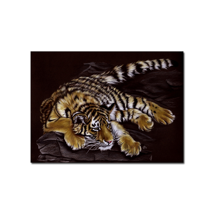 Tiger 39 big cat animal feline kitty kitten drawing painting Sandrine Curtiss