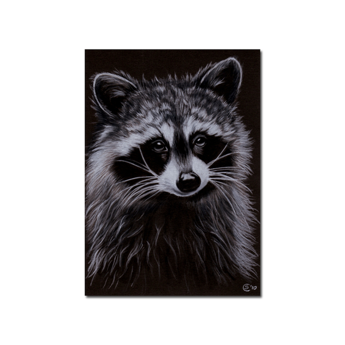 RACCOON 10 woodland critter  pencil painting Sandrine Curtiss Art Print 5x7""
