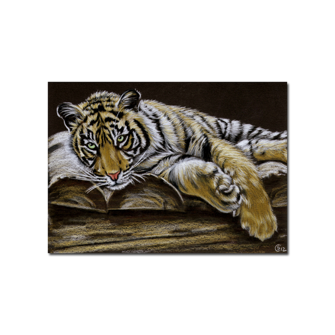 Tiger 42 big cat animal feline kitty kitten drawing painting Sandrine Curtiss