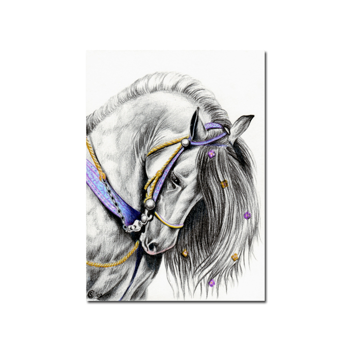 HORSE 5 equine cheval camarguais picture pencil painting Sandrine Curtiss Art