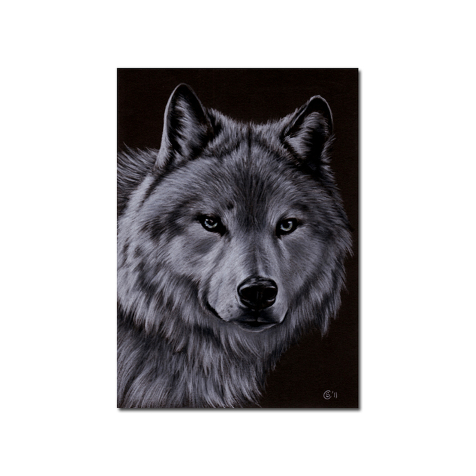 WOLF 3 dog puppy canine loup pencil painting Sandrine Curtiss Art Print 5x7""