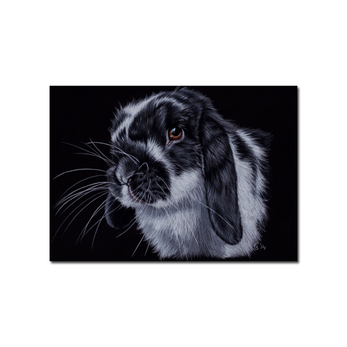BUNNY 131 rabbit black dutch Easter pet drawing painting Sandrine Curtiss Art
