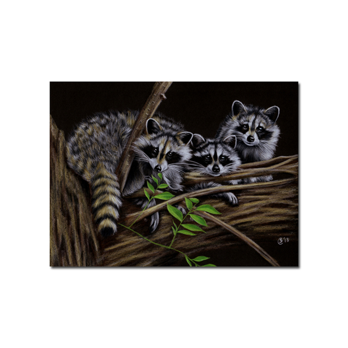 RACCOON 14 woodland critter  pencil painting Sandrine Curtiss Art Print 5x7""