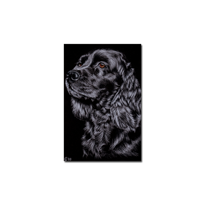 COCKER SPANIEL dog puppy pet pencil painting Sandrine Curtiss Art Limited