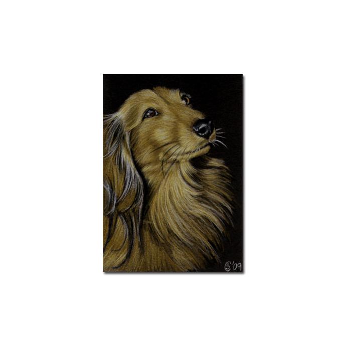DACHSHUND 6 portrait Teckel dog puppy pet pencil painting Sandrine Curtiss Art