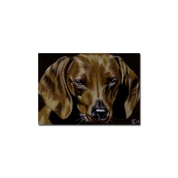 DACHSHUND 9 Teckel dog puppy pet pencil painting Sandrine Curtiss Art Limited