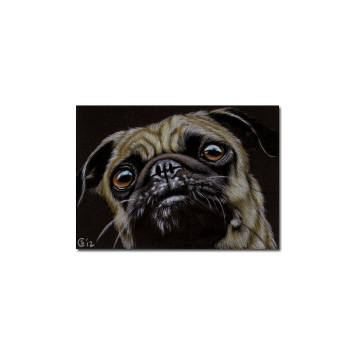 PUG 8 dog puppy pet pencil painting Sandrine Curtiss Art Limited Edition PRINT