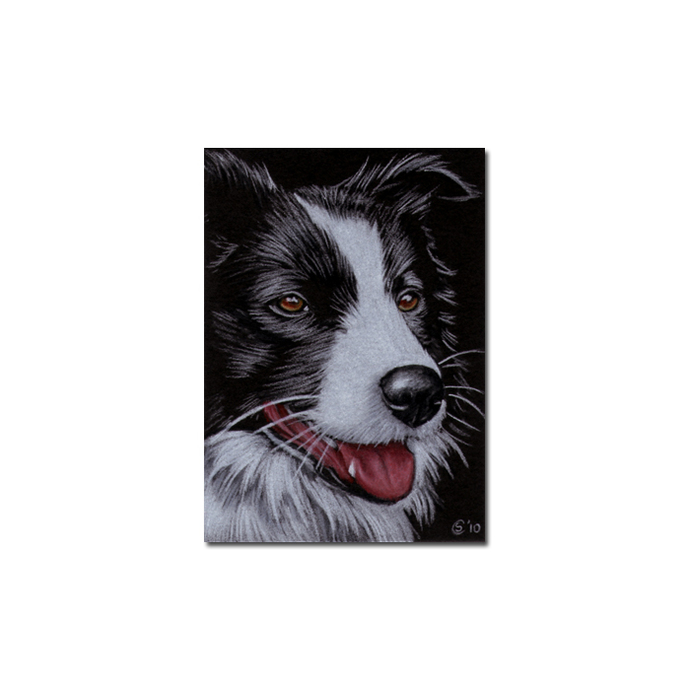 COLLIE dog puppy pet pencil painting Sandrine Curtiss Art Limited Edition PRINT