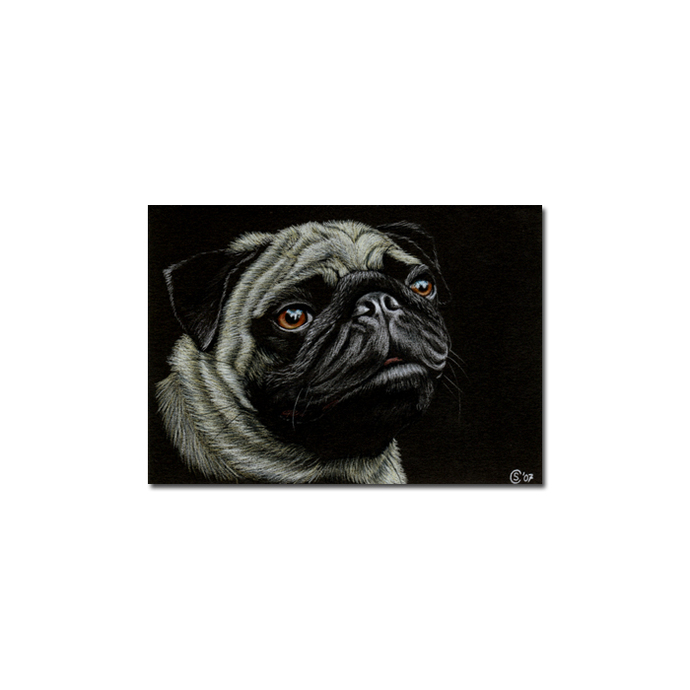 PUG dog puppy pet pencil painting Sandrine Curtiss Art Limited Edition PRINT