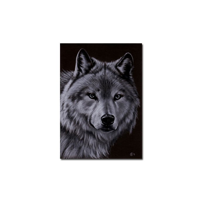 WOLF 3 dog puppy canine loup pencil painting Sandrine Curtiss Art Limited