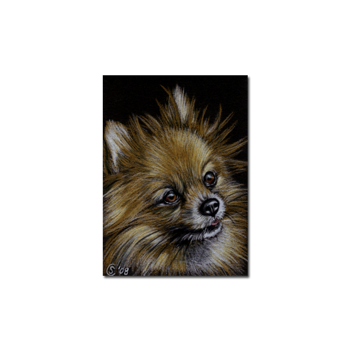 POMERANIAN dog puppy pet pencil painting Sandrine Curtiss Art Limited Edition