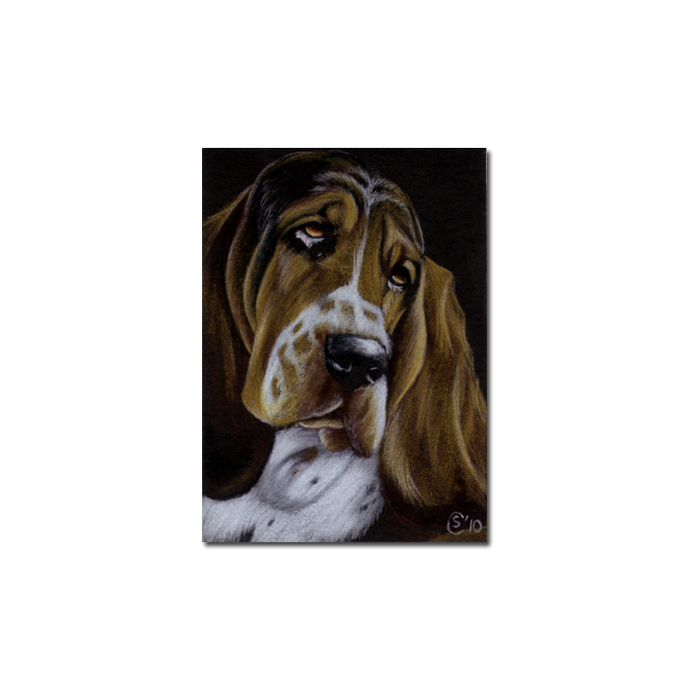 BASSET HOUND 7 dog puppy pet pencil painting Sandrine Curtiss Art Limited