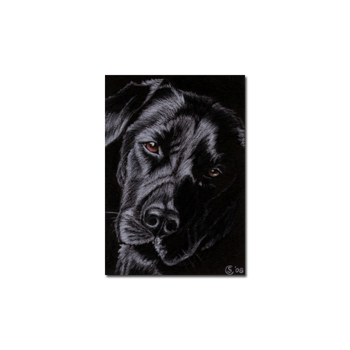 BLACK LABRADOR 15 lab dog puppy pet pencil painting Sandrine Curtiss Art Limited